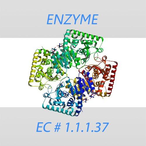 Malate Dehydrogenase recombinant